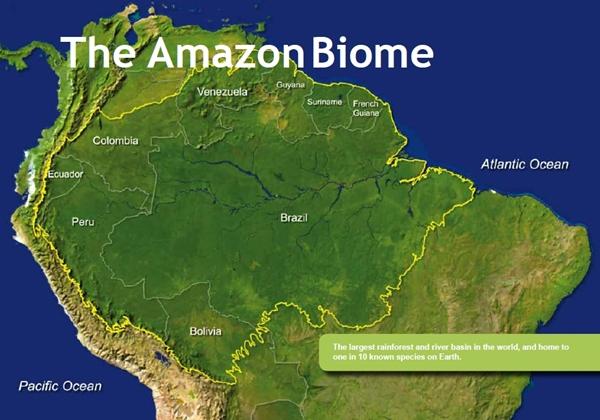 Il declino della foresta amazzonica solo misteri for Pianta della foresta di pioppo