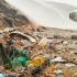 Biologa italiana scopre il bruco che mangia la plastica