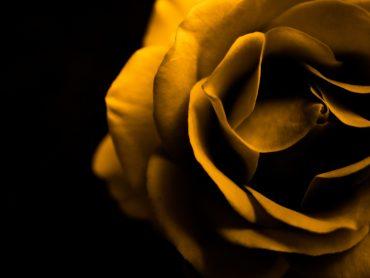 Evoluzione: Risolto il mistero delle piante da fiore